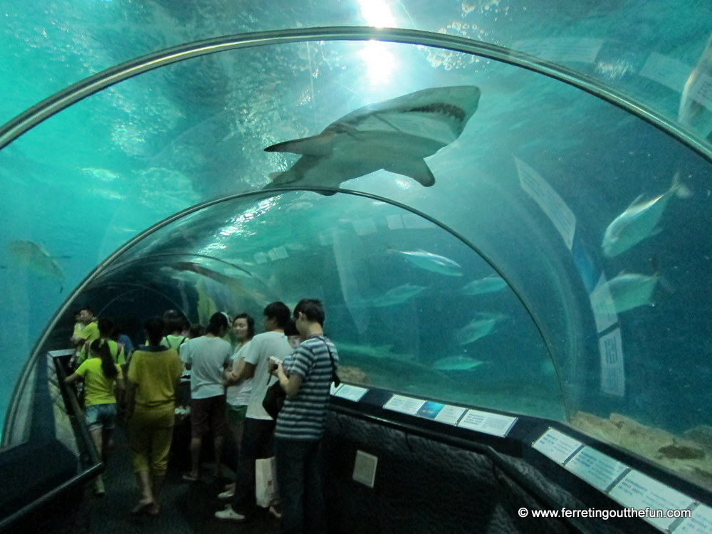 Shanghai aquarium an underwater adventure ferreting out for Oceanic fish tanks